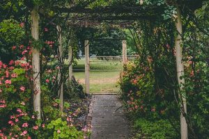 The benefits of flowers, shrubs and trees in and around your property