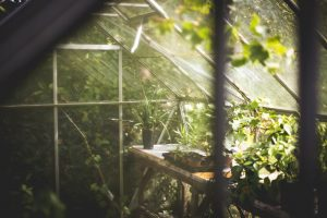 How to build a greenhouse on a budget