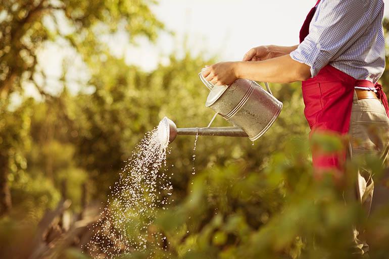 6 ideas for creating a profitable small farm