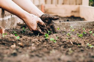What are the requirements to start gardening at home