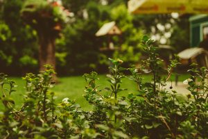 Tips for making your garden more private this summer