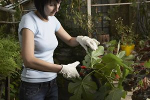 How to store garden waste better