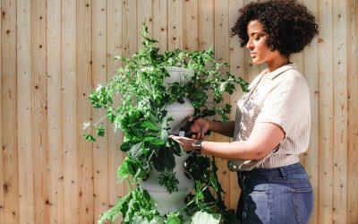 4 environmentally friendly gardening tips